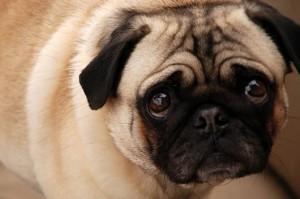 Sad-puppy-300x199
